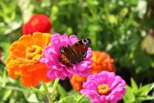 Besök Trädgårdsmässan och bli inspirerad!