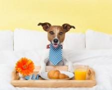 hund som har frukost på hotell
